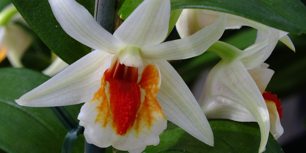 February Meeting at Newfield's - Orchid Show