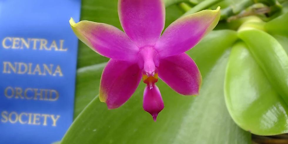 Orchids of Borneo (via Zoom)