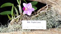 Rth. Triple Love.JPG