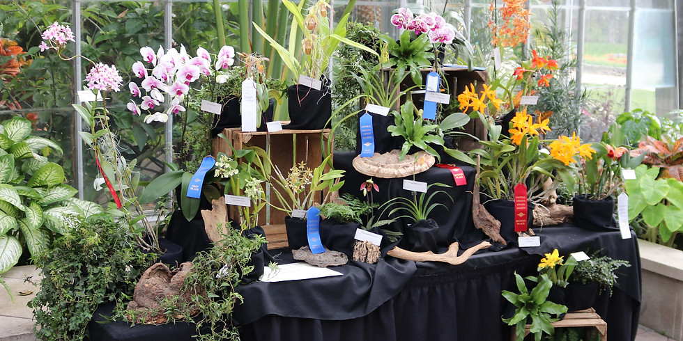 Spring Orchid Show @ Garfield Park
