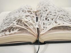 Reader's Digest Mandala, 2014.jpg