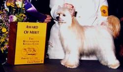 Award of Merit!