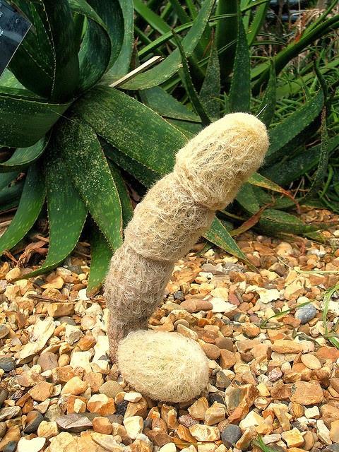 sexy-cactus.jpg