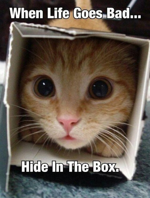 CAT IN THE BOX.JPG