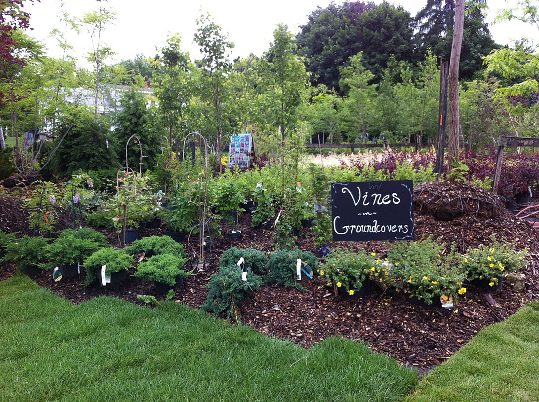 mead u0027s nursery u0026 garden center queensbury ny shrubs