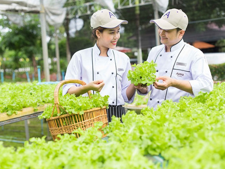 Hydroponic farms in hotels around the world