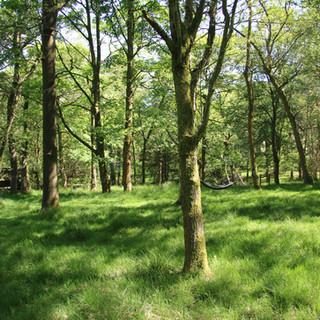 Hampers Wood