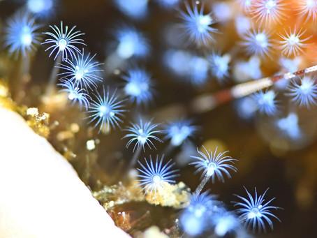 年末年始はうぐる島で潜り倒す!【はえもの綺麗よ12/29うぐるダイビングツアー】2020/12/29-2021/1/3
