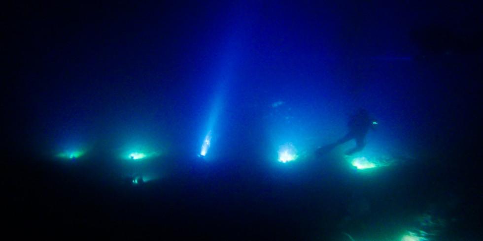 鵜来島ライトトラップ・新月の鵜来島で挑戦!!きっとレア生物が・・・♪