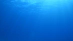 24時間かけて行く価値あり!【世界遺産、ボニーブルーの海へ小笠原ダイビングツアー】2021/9/21-26