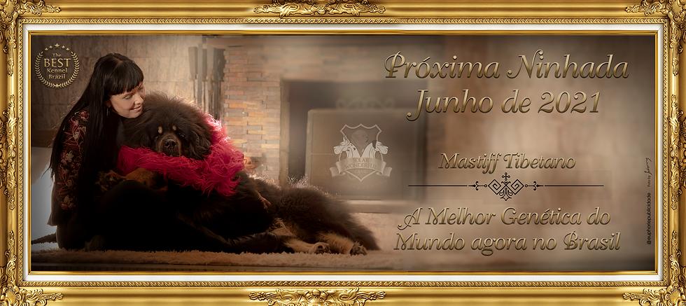 Próxima Ninhada Mastiff Tibetano