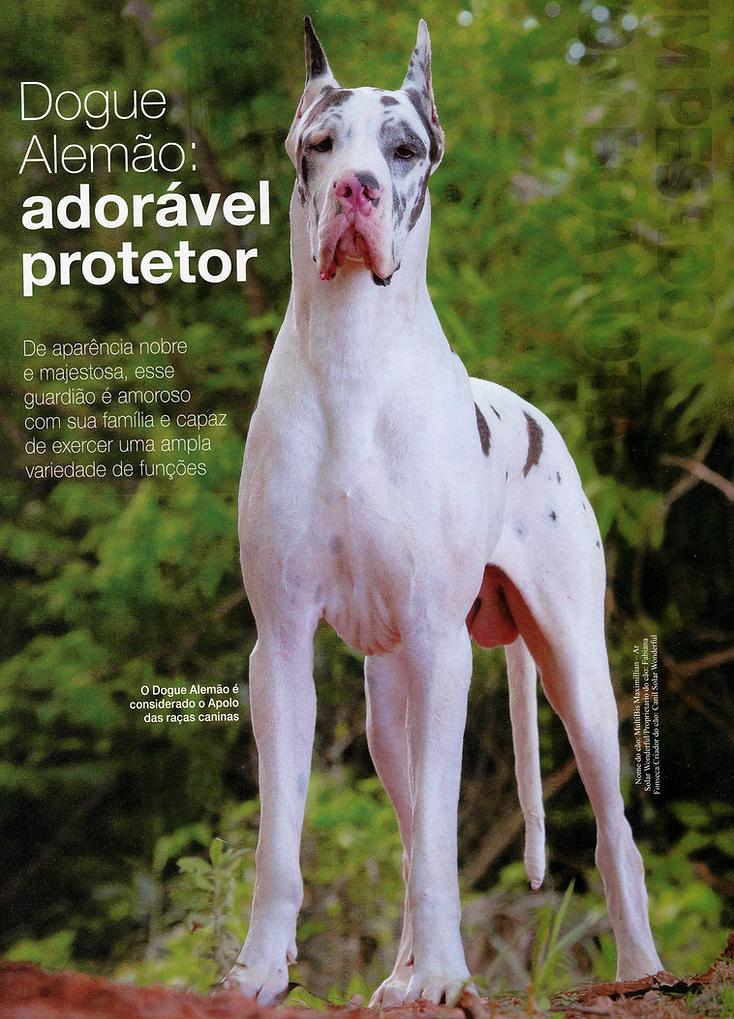 Dogue Alemão: Adorável protetor
