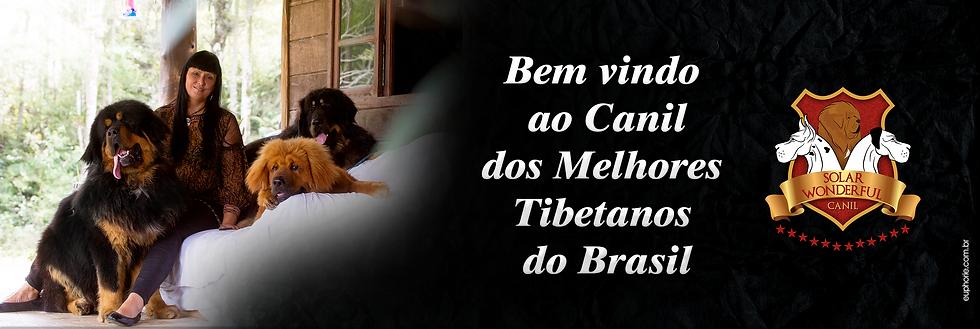 Bem vindo ao canil dos melhores tibetanos do brasil