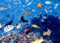 海洋生物_edited.png