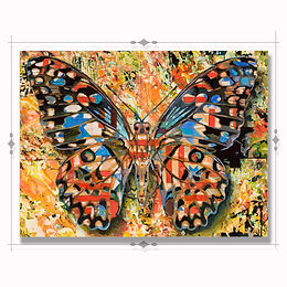 Butterfly no.3