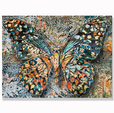 Butterfly no.1