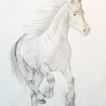 Galloping Friesian - I love the feeling