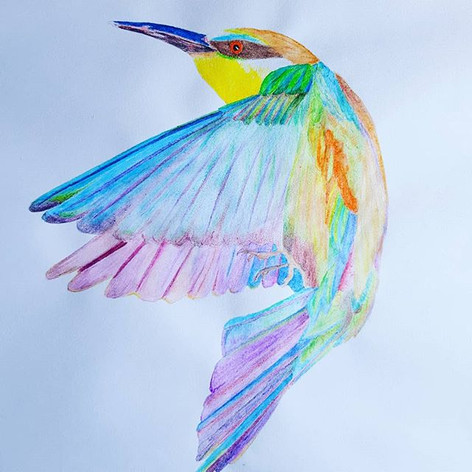 Vivid Kingfisher ... a foray into colour