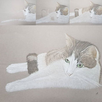 Evolution of a tabbycat portrait_#drawin