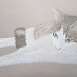 Evolution of a tabbycat portrait_#drawin