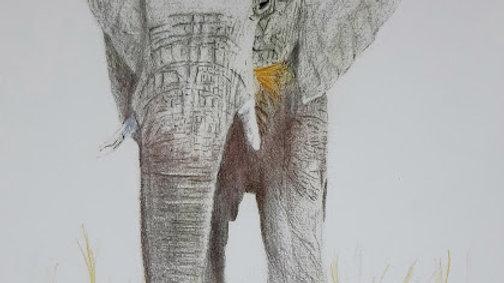 A3 Elephant Print