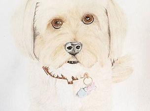 Evolution of a pet portrait - Tashi the