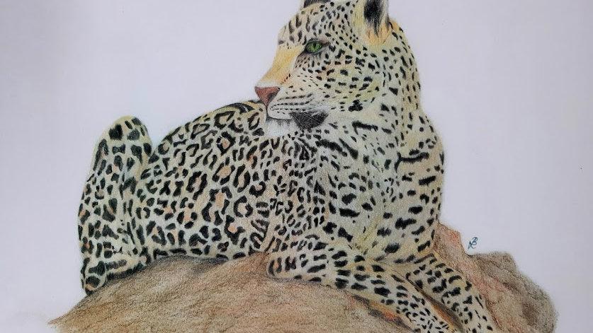 A3 Leopard Print