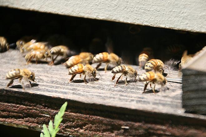 LKC Honey by K. Swayze_4939.jpg