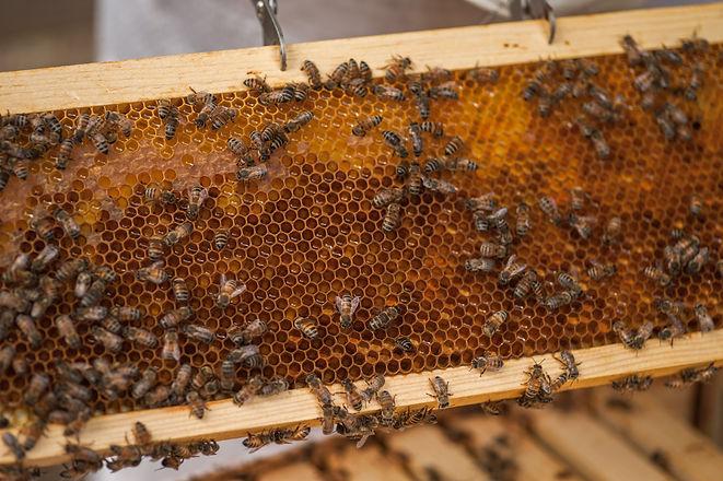 LKC Honey-15.jpg