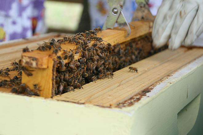 LKC Honey by K. Swayze_4937.jpg