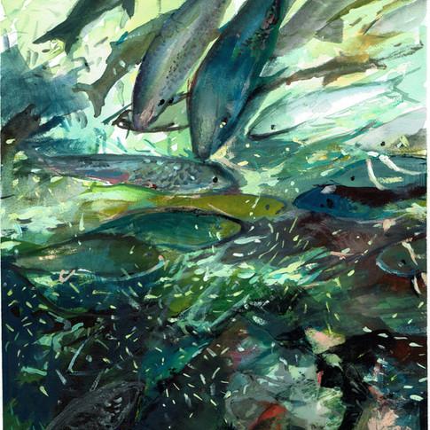 Bonefish in Dangriga