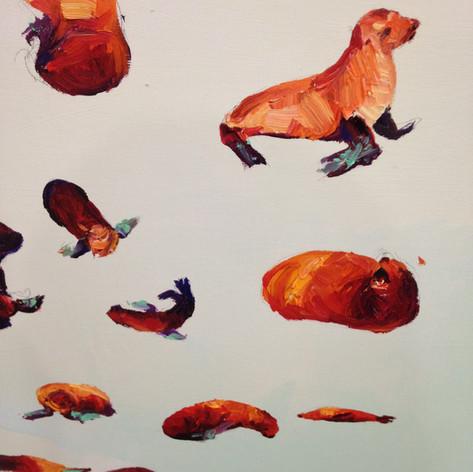 Sea Lion Detail