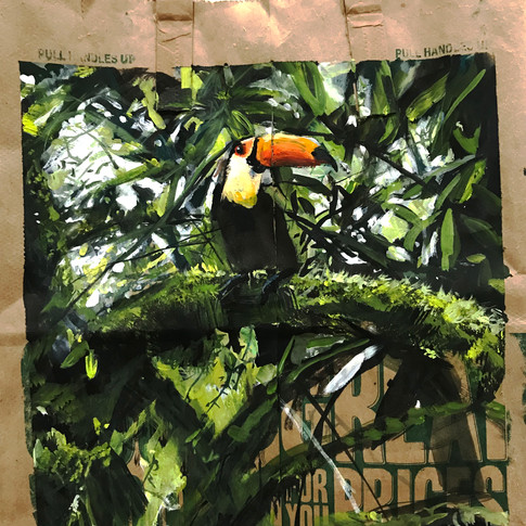 The Toucan Can, So Can You