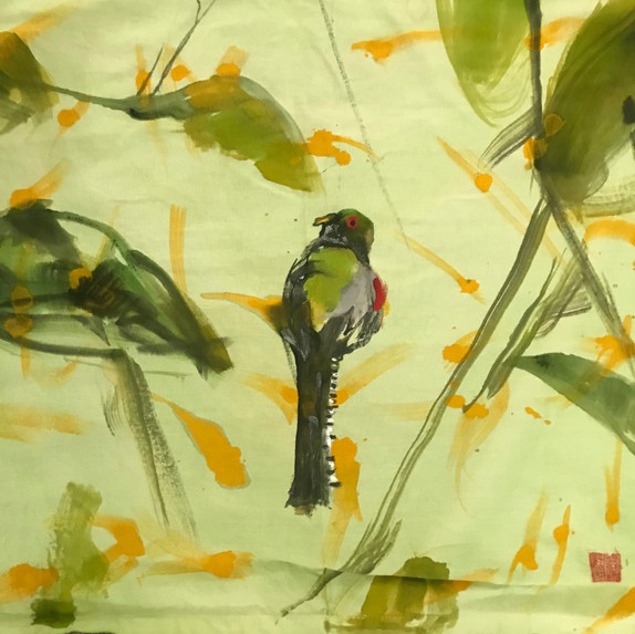 Bird in the Choco sighting