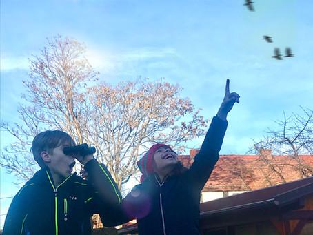 Nachmittag der Wintervögel