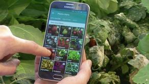 Plantix.net - Agricultura numa App