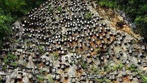 Shennongjia: Apicultura em Equilibrio