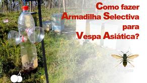 Como fazer Armadilha para Vespas Asiáticas?