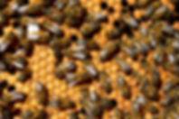 Quinta das Ginjas - Apicultura
