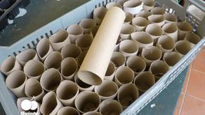 Como fazer Sementeiras com rolos de papel higiénico?