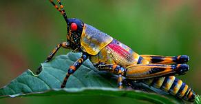 Um Mundo sem Insectos?