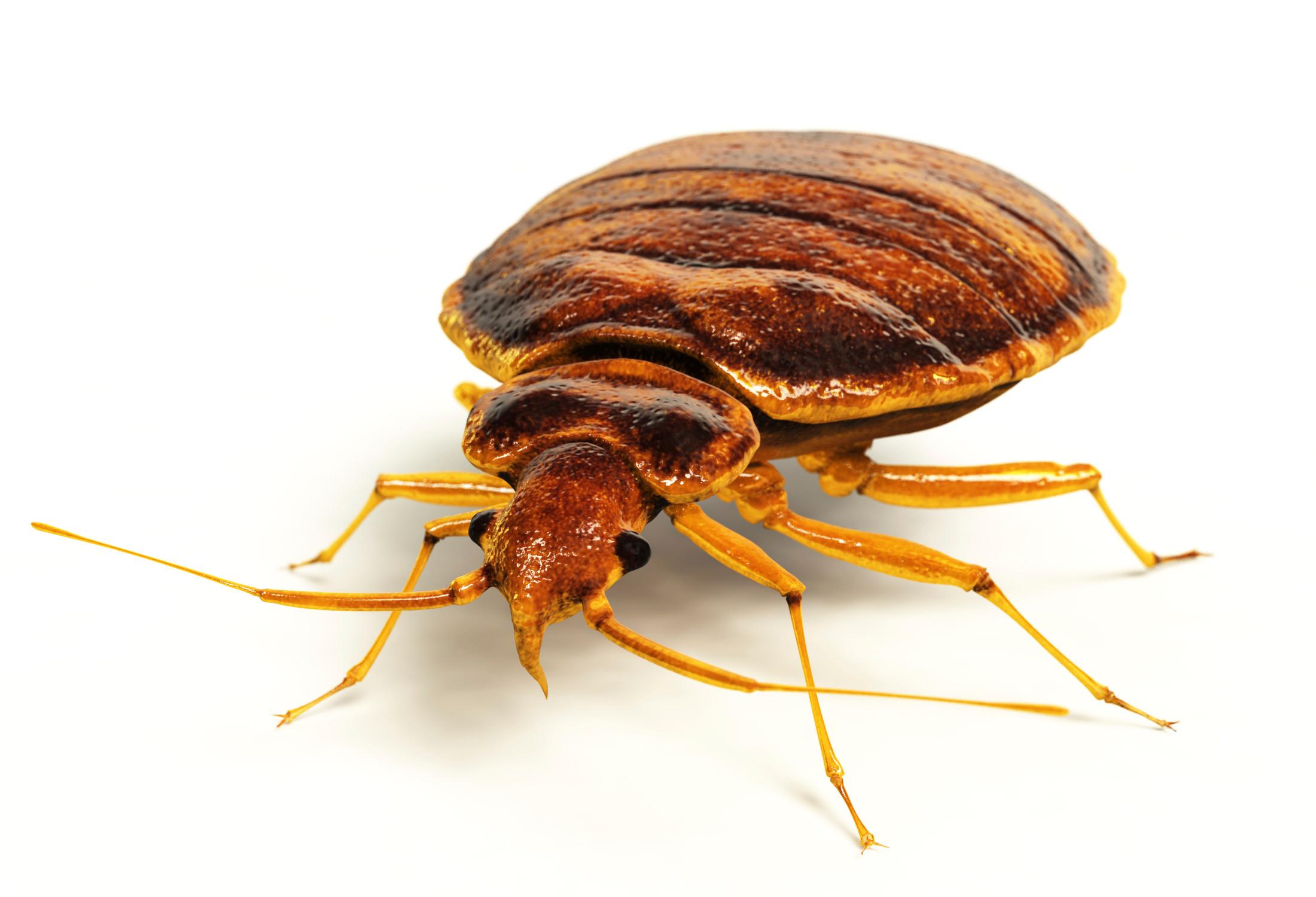 Bedbug Treatment (per room)