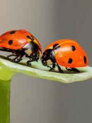 Les insectes en voie d'extinction