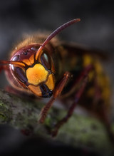 Les espèces invasives menacent les équilibres