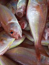 Les réserves halieutiques menacées
