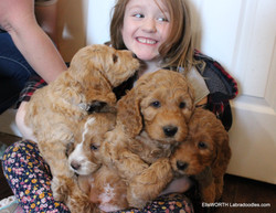 How many puppies can one