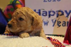 Happy New Year Holly