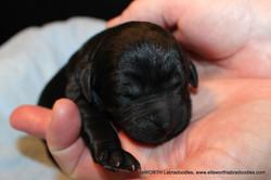 The 10th puppy born at 7:25 pm