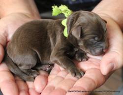 6th puppy born at 3:20 AM
