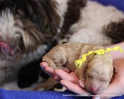 Hazel loves her puppies